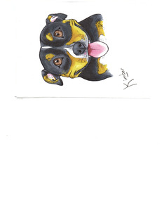 Kimber Drawing