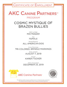 Mysti AKC