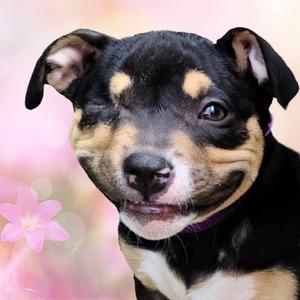 Happy Puppy pink flowers