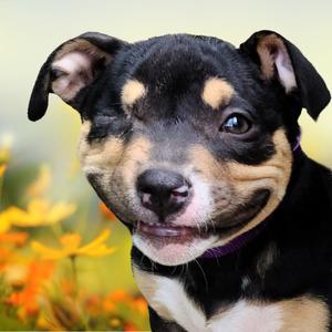 Happy Puppy yellow flowers