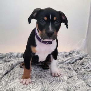 Everest, Cleo (Rosie)