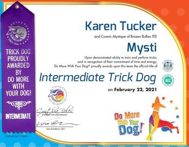 Mysti DMWYD Intermediate Trick Dog