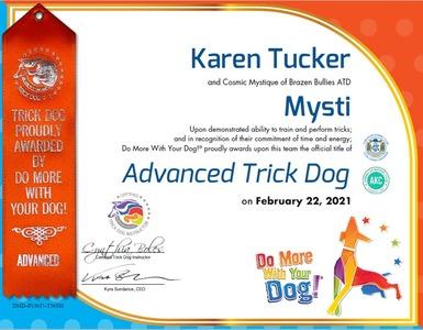 Mysti DMWYD Advanced Trick Dog